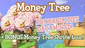 Money Tree Guide