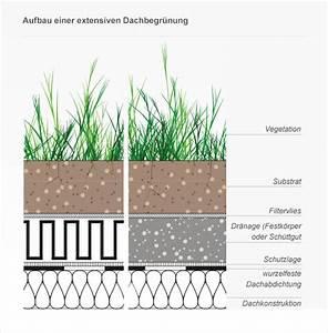 Extensive Dachbegrünung Aufbau : gr ne oasen ein garten f r ihr hausdach ratgeber ~ Whattoseeinmadrid.com Haus und Dekorationen