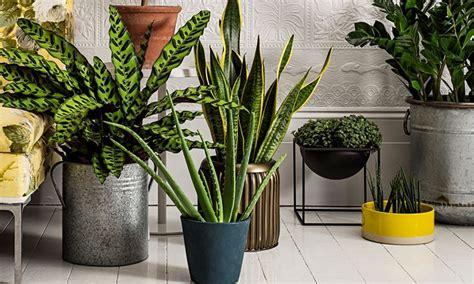 piante d arredo per interni vasi arredo interno vasi per piante vasi arredo