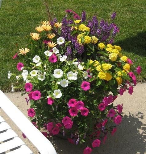 wave petunias in pots butiful flower pot with wave petunias flower pots pinterest