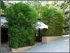 Sichtschutzpflanzen Für Terrasse : sichtschutz terrasse pflanzen terrasse sichtschutz pflanzen terrasse hause dekoration bilder ~ Indierocktalk.com Haus und Dekorationen