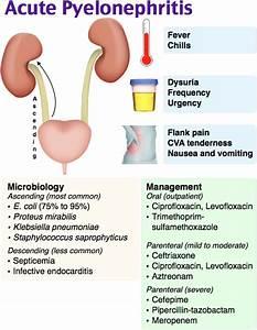 Acute Pyelonephritis