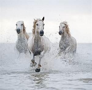 white horses | horses | Pinterest