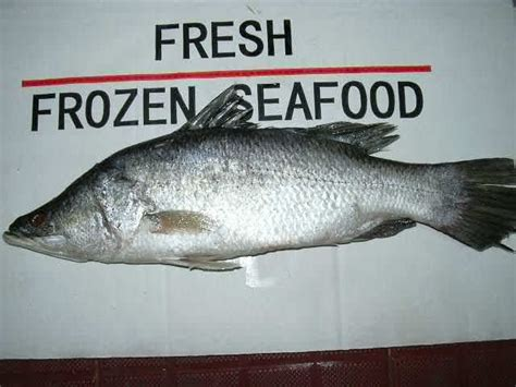 barramundi productsvietnam barramundi supplier