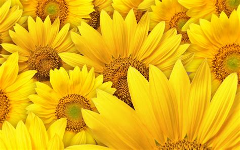 Background Yellow Wallpaper by 30 Hd Yellow Wallpapers