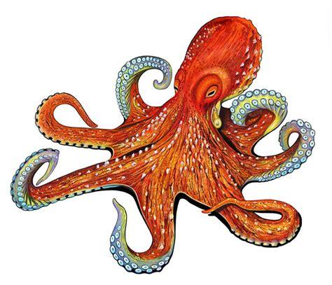 how to install a kitchen backsplash porcelain octopus large