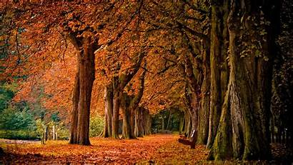 Scenery Fall Autumn Nature Landscape Bench Wallpapers
