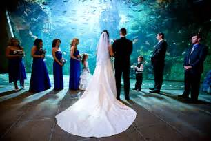 aquarium wedding venues seattle aquarium wedding seattle aquarium