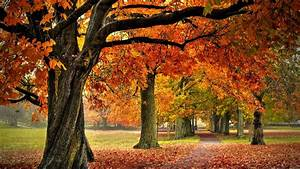 Trees Page Landscapes Nature Autumn Forests ~ idolza