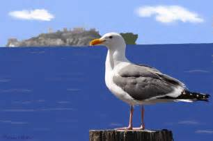 Ocean Seagull