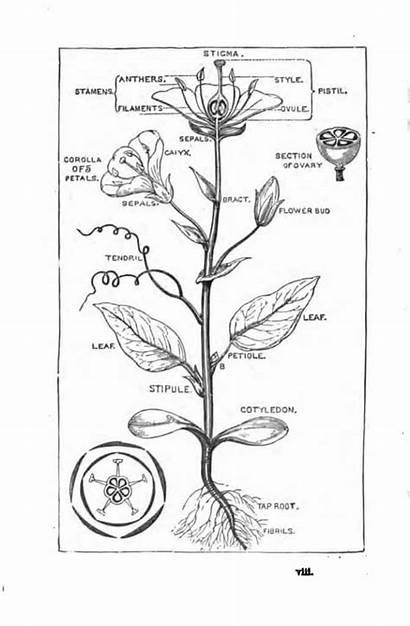 Botany Books Flower Plant Plants Study Flowers