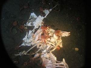 What Happens to a Dead Body in the Ocean? DNA Project