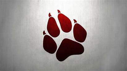 Paw Wolf Artwork Wallpapers Furry Paws Prints