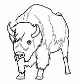 Bison Coloring Pages Buffalo Animal Coloriage Bill Bills Bullet Animaux Printable Colorier Imprimer Dessin Animals Nord American Des Getcolorings Pour sketch template