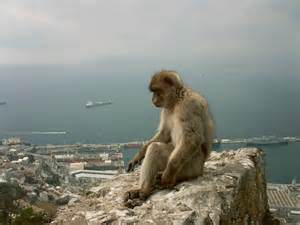 Spectacular Animals - Gibraltar's Monkeys Gibraltar