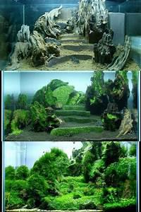 Süßwasserfische Fürs Aquarium : 25 einzigartige aquarium gestalten ideen auf pinterest ~ Lizthompson.info Haus und Dekorationen