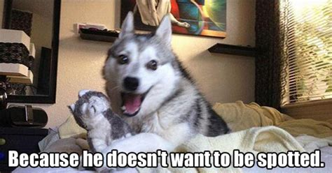dog puns small  valuable