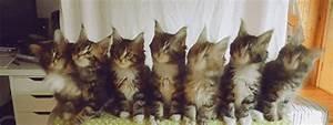 Coussin Tete De Lit Gifi : musique petit chat photos de chats ~ Dailycaller-alerts.com Idées de Décoration