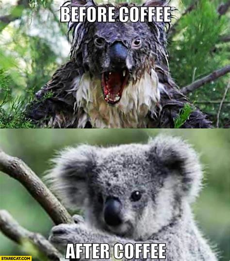 Angry Koala Meme - mad koala www imgkid com the image kid has it