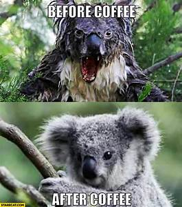 Mad Koala | www.imgkid.com - The Image Kid Has It!