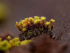 Moos Auf Dem Dach : moos auf dem dach foto bild pflanzen pilze flechten moose farne bl ten und pflanzen ~ Watch28wear.com Haus und Dekorationen