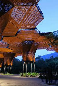25+ best ideas about Tree Structure on Pinterest | Bamboo ...