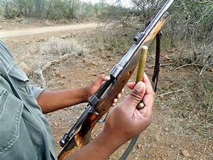 Elephant Gun Bullet Size