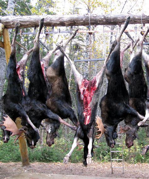 chambre froide pour gibier services aux chasseurs pourvoirie le chasseur