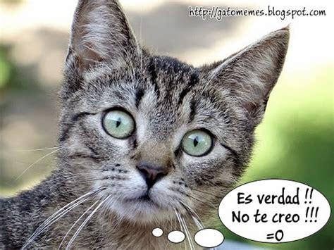 Memes De Gatos - memes graciosos 2 car interior design