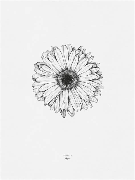 Gerbera | Sunflower tattoos, Gerbera daisy tattoo, Tattoo