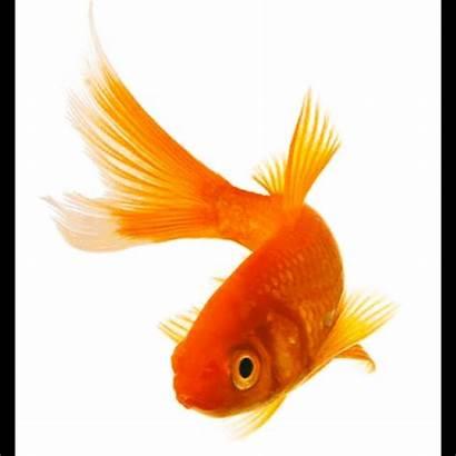 Fish Head Effects Picsart Exposure Remove Sticker