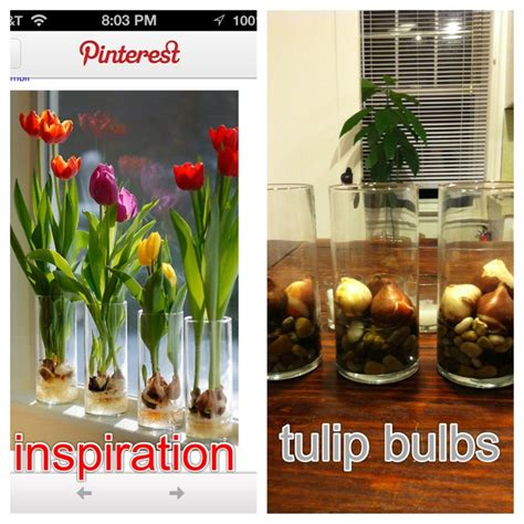292 best images about tulips on how to grow