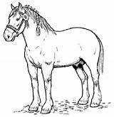 Horse Coloring Draft Cliparts Favorites sketch template