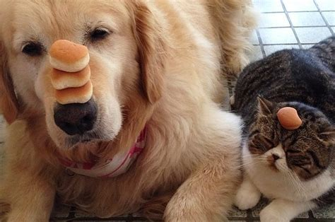 Cute Cats and Dogs as Friends