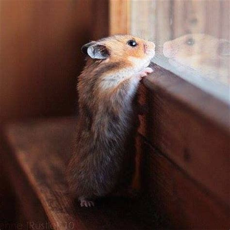 images  real life mouse adventures