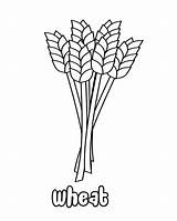 Wheat Coloring Harvest Corn Grains Template Sheets Presents Stage Sketch sketch template