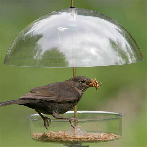 winter bird feeders backyard birds the bird food store