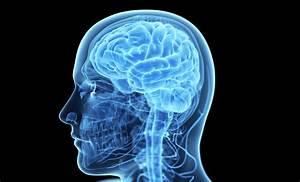 What U2019s Inside Your Brain   U2013 Work   Life  U2013 Medium