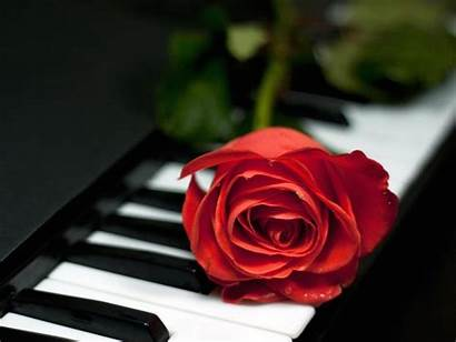 Rose Single Romantic Wallpapers Cool Wallpapergeeks Backgrounds