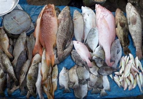 strengthening fisheries science  management