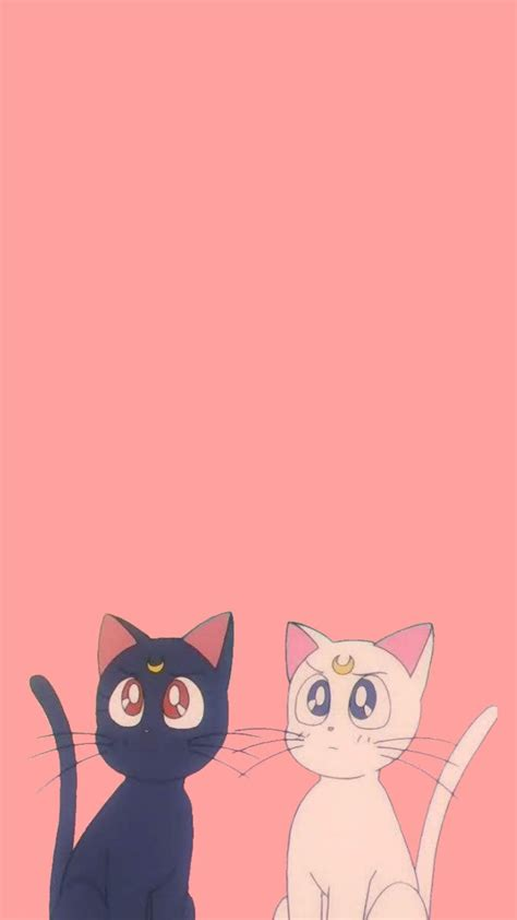 sailor moon cats wallpapers top  sailor moon cats
