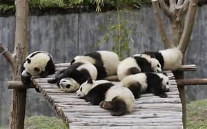 Buckets of Cute: Pandas at Sichuan Giant Panda Sanctuaries ...