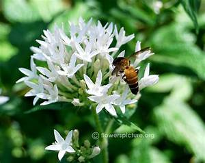 White Star Flowers in Cluster - Pics about space