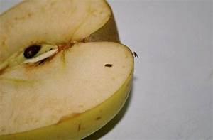 Se Débarrasser Des Mouches Naturellement : petite mouche cuisine ~ Melissatoandfro.com Idées de Décoration