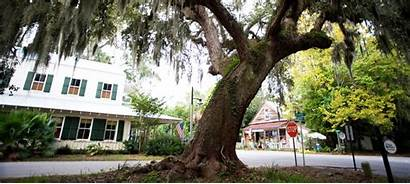 Bluffton Carolina South Map Mind Willow Tree