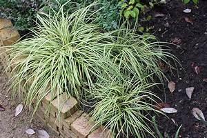Pflanzen Für Japangarten : beliebte ziergr ser f r den garten native plants ~ Sanjose-hotels-ca.com Haus und Dekorationen