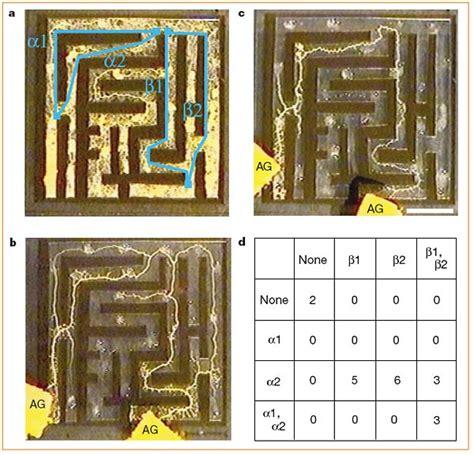 smarter   average slime maze solving