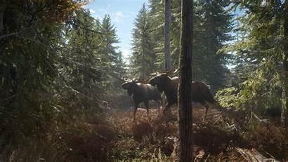 Wild Call Moose Thehunter Avalanche Trotting Studios