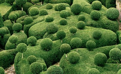 Topiary : Surreal Views Of The Marqueyssac Topiary Gardens
