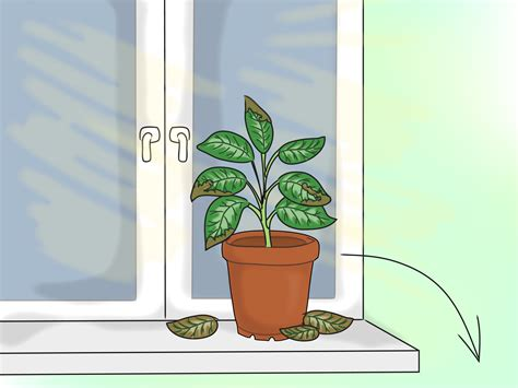 indoor plant lights how to provide the right light requirements for indoor plants